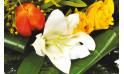 zoom un ensemble floral du bouquet Fleurs d'orangé