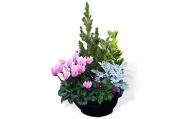L'Agitateur Floral |Image de la coupe de plantes extérieures
