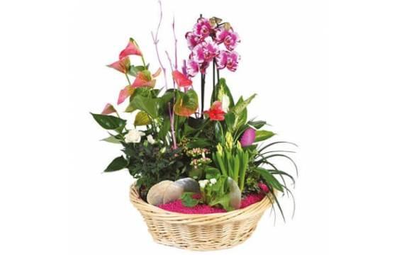 L'Agitateur Floral | image de la Coupe de plante Le Palais des Fleurs