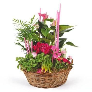 L'Agitateur Floral | image de la Composition de plantes Le Jardin des Druides