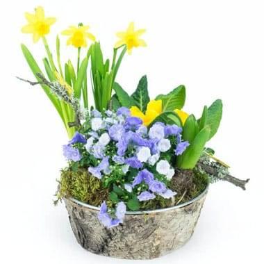 L'Agitateur Floral | image de la Composition de plantes Jonquilles en Folie