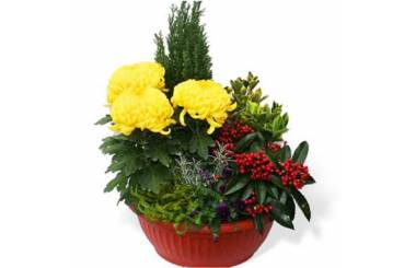 L'Agitateur Floral  image de la Coupe de plantes Jaune et Rouge pour cimetière