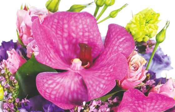 zoom sur une orchidée vanda