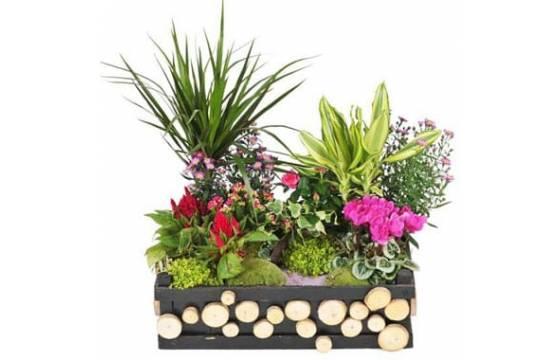 L'Agitateur Floral |image de la Composition de plantes de deuil Le Jardin d'Olympe