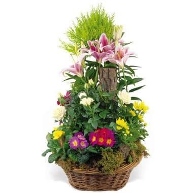 L'Agitateur Floral |image de la coupe de plantes symphonie