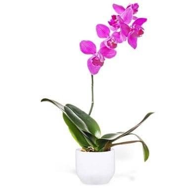 L'Agitateur Floral | image de l'Orchidée Rose Mauve Une Branche