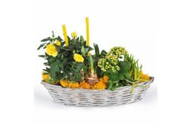 L'Agitateur Floral | image de la composition de plante dans les tons jaunes Etamine la fleuriste