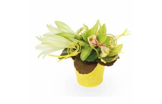 L'Agitateur Floral | Composition de fleurs Gaité en image de couverture