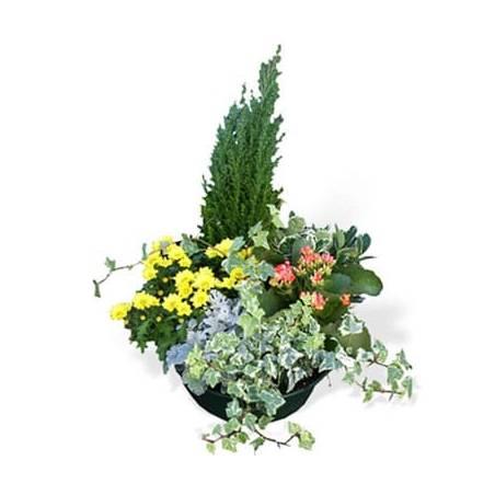 L'Agitateur Floral | image de l'assemblage de plantes le jardin du temps