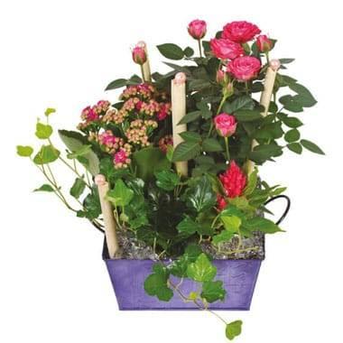 L'Agitateur Floral | image de la coupe de plante le jardin d'italie