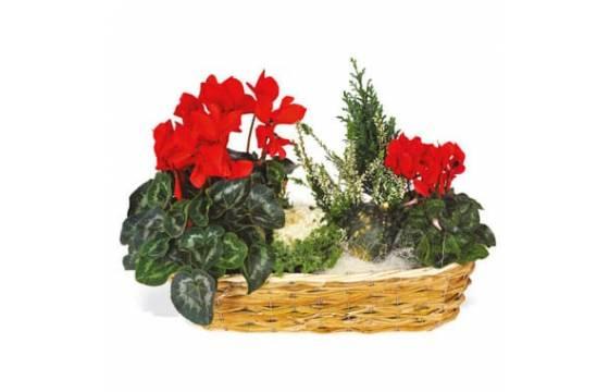 L'Agitateur Floral |image de la composition de plantes vertes & fleurie Etincelle