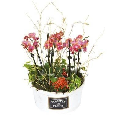 L'Agitateur Floral | image de la coupe de plantes lierres et orchidées Miss Eglandine