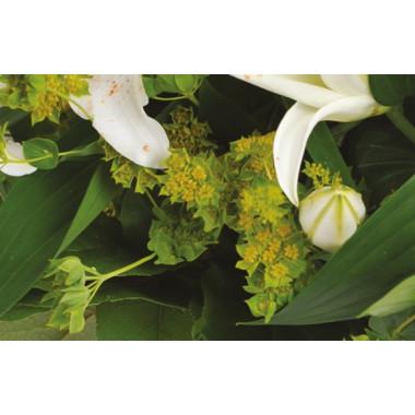 zoom sur les buplurum du bouquet de fleurs