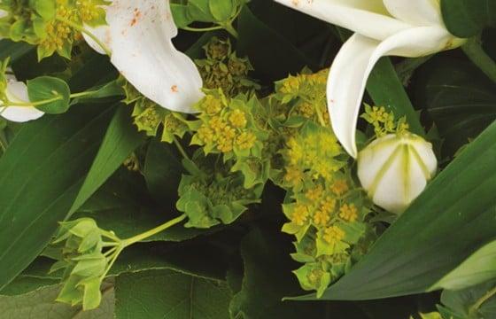 L'Agitateur Floral | zoom sur les buplurum du bouquet de fleurs