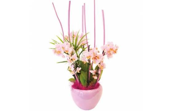 L'Agitateur Floral | image de la Coupe de minis Orchidées Sweety