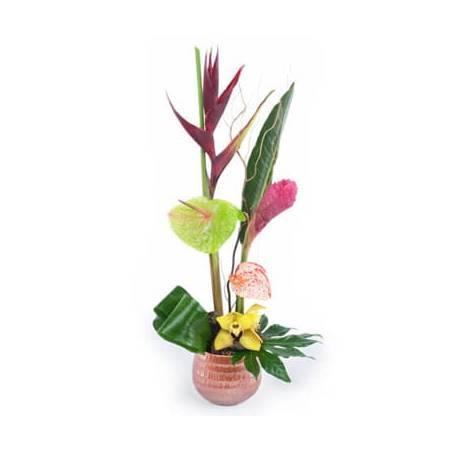 L'Agitateur Floral   Image composition exotique Aumaona