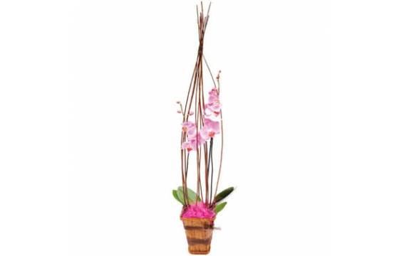 L'Agitateur Floral | image de l'orchidée rose Cage d'amour
