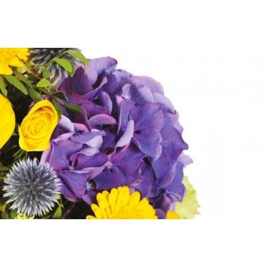 zoom sur un hortensia de couleur mauve