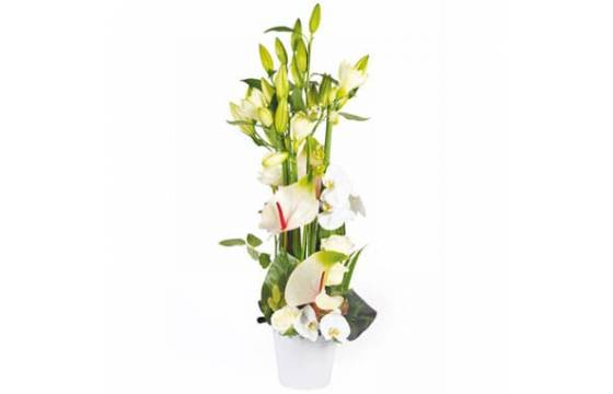 L'Agitateur Floral | Image de couverture composition florale blanche Meringue