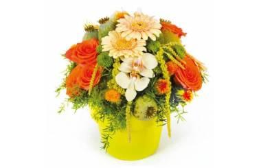 L'Agitateur Floral |image de la composition de fleurs Mignon