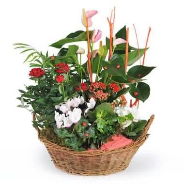 L'Agitateur Floral | image de la coupe de plantes vertes et fleuries la corbeille fleurie