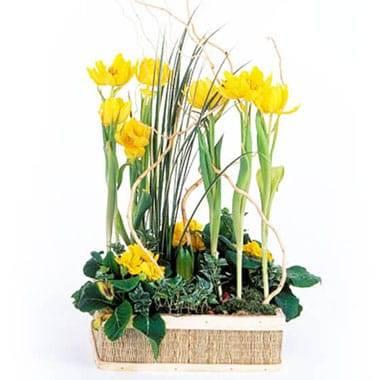 L'Agitateur Floral   image de la Composition de plantes Narcisses au Vent
