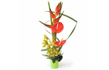 L'Agitateur Floral | Image de la composition de fleurs exotiques Sauvage