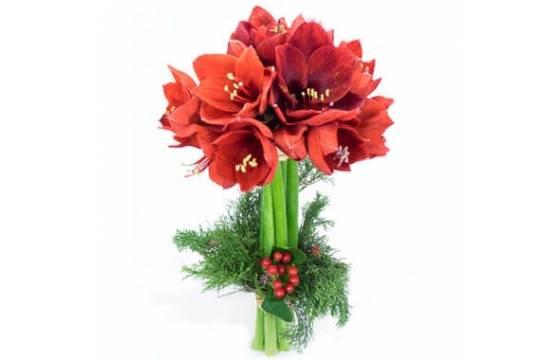 L'Agitateur Floral | image du Bouquet d'Amaryllis L'enchanteur