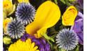 zoom sur un magnifique calla de couleur jaune