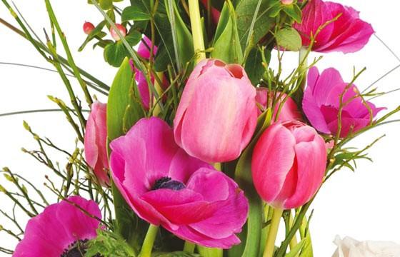 vue sur des tulipes et anémones rose de la composition Impérial