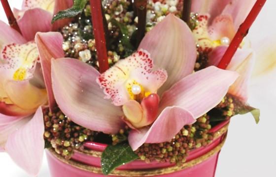 vue sur les orchidée de couleur rose