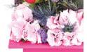 zoom sur les tête d'hortensia rose