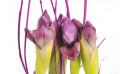 Composition florale : zoom sur des iris