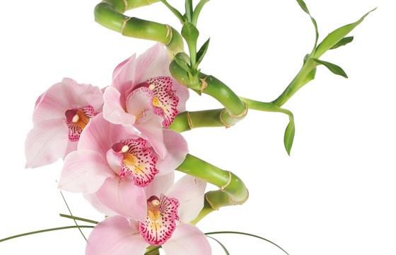 image des orchidées roses de la composition florale
