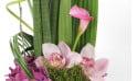 image des orchidées et du calla de la composition Exubérance Florale