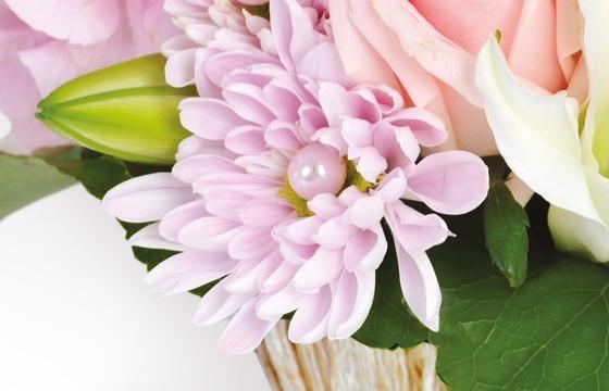 zoom sur un chrysanthème de couleur rose