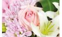 Composition Velour Rose : zoom sur une rose rose