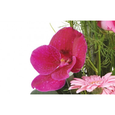 composition lady : zoom sur une orchidée
