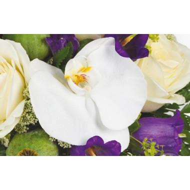 Sourire : image d'une orchidée blanche