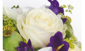 Sourire : image d'une rose blanche