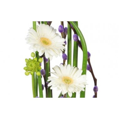 composition de fleurs Diva : zoom sur les germinis blancs
