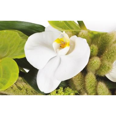 vue sur une magnifique orchidée blanche