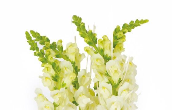 image du haut de la composition florale Sissi