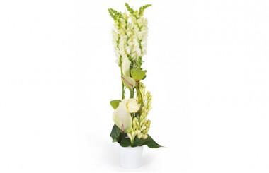 image de la composition de fleurs blanches Sissi