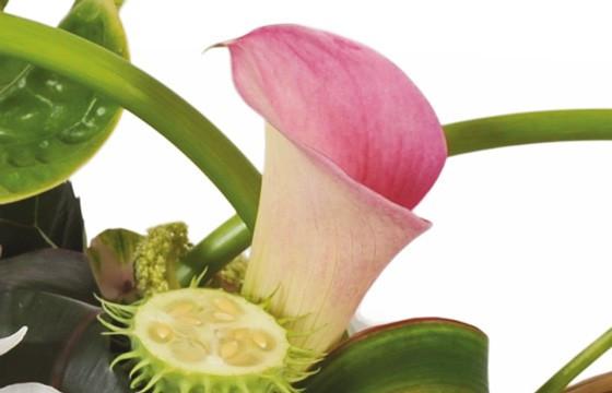 image d'un calla de couleur pastel