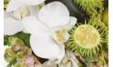 image d'une magnifique orchidée blanche de la composition
