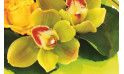 Image de l'orchidée dans les tons vert de la composition de fleurs