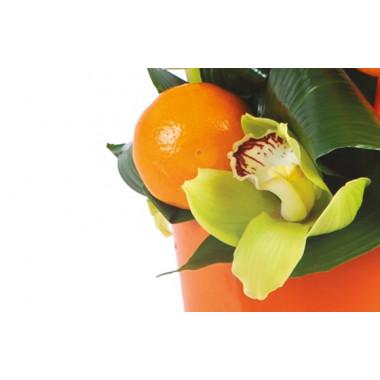 L'Agitateur Floral |vue sur une orange et un fleuron d'orchidée de la composition de fleurs exotique