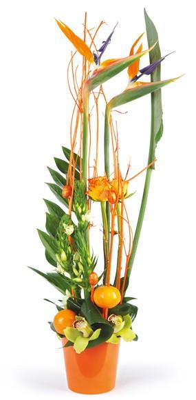 livraison composition de fleurs exotiques tons orange express 4 h 7 7 l 39 agitateur floral. Black Bedroom Furniture Sets. Home Design Ideas