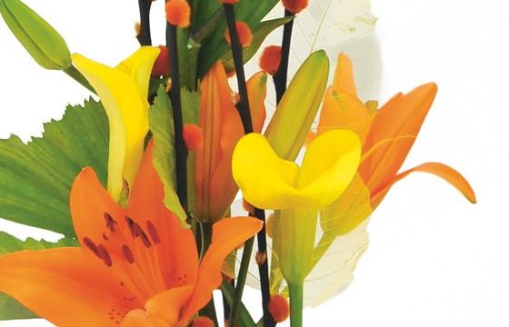 zoom sur des callas jaunes et des lys oranges